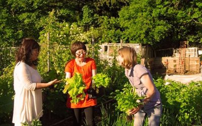 YUMI Intercultural York are looking for a Volunteer Garden Assistant