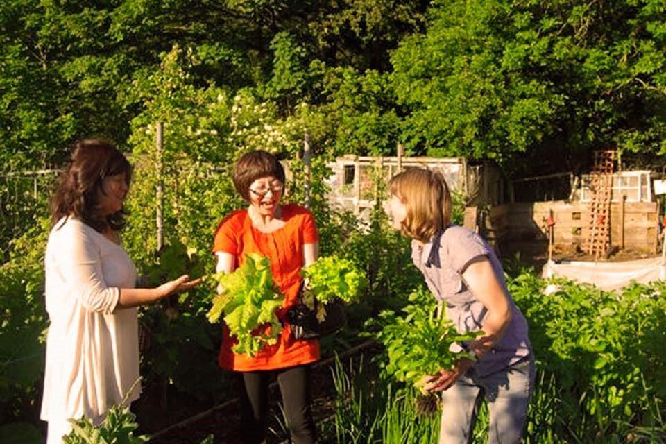 YUMI Intercultural York are looking for a Volunteer Garden Assistant