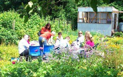 Magical community garden WLTM new friends