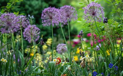 Growing Green Spaces – Surgery