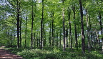 Help to co-design the York Community Woodland – deadline 26 May